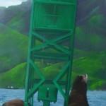 seals_on_buoy