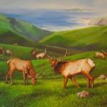 tule_elk