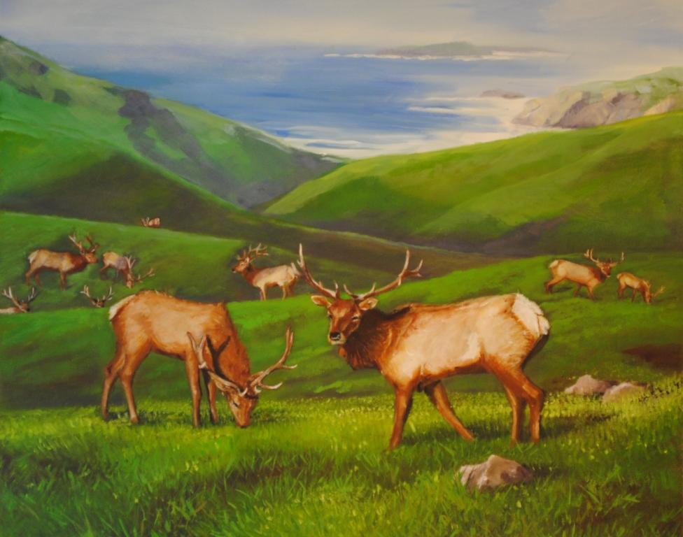 Tule-Elk-@-Point-Reyes